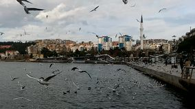 Sea and gulls. Canakkale throat with sea and gulls stock video footage
