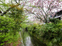 The canal along Tetsugaku no michi, Philosopher's Path. View of the canal along Tetsugaku no michi, Philosopher`s Path. Kyoto, Japan Royalty Free Stock Image