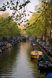 Canal of Amsterdam. The Netherlands. Focus on tree branch in the foreground Stock Image