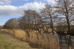 Free Canal And Reeds Stock Photos - 30560103