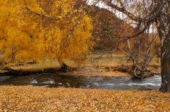 Canal bonito na maneira do distrito de Chemal a Aktash, Rússia imagem de stock