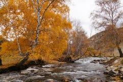 Canal bonito na maneira do distrito de Chemal a Aktash, Rússia imagem de stock royalty free