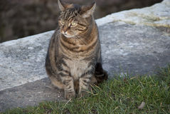 Canal cat Royalty Free Stock Photography
