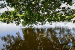 Canal con la sombra del árbol Fotos de archivo libres de regalías