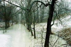 Canal con los árboles Imagenes de archivo