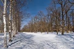 Canal congelado en el parque Foto de archivo