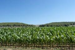 Canal da colheita Foto de Stock