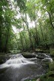 Canal dans la forêt tropicale photographie stock libre de droits