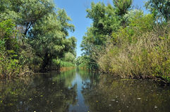 Canal de água no delta de Danúbio imagens de stock