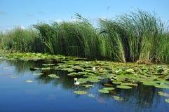 Canal de água, rio no delta de Danúbio imagens de stock royalty free