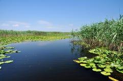 Canal de água, rio no delta de Danúbio fotografia de stock royalty free