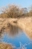Canal de agua con las plantas del humedal Fotografía de archivo