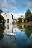Canal de Annecy da cisne Foto de Stock Royalty Free