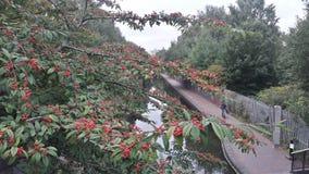 Canal de Birmingham photos stock