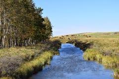 Canal de la irrigación Fotos de archivo libres de regalías