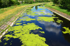 Canal de rio bonito com lentilha-d'água Fotografia de Stock