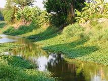Canal del agua que rodea con el ambiente tropical verde Fotos de archivo libres de regalías