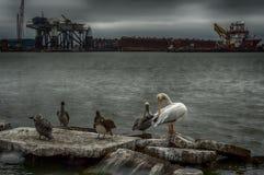 Canal do navio de Galveston Fotos de Stock Royalty Free
