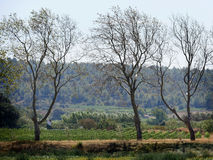 Canal du Midi Countryside in Aude, Languedoc-Roussillon royalty free stock image