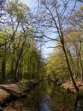 Canal en el bosque Fotografía de archivo libre de regalías
