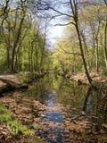 Canal en el bosque Fotos de archivo