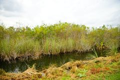 Canal in everglades national park. A canal in everglades national park, Florida, USA royalty free stock photo