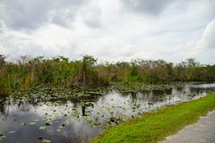 Canal in everglades national park royalty free stock images