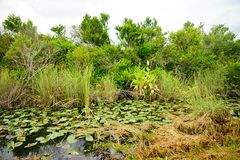 Canal in everglades national park. A canal in everglades national park, Florida, USA royalty free stock images