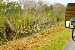 Canal in everglades national park stock photo