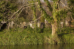 Canal grande da união e o cemitério na elevação de Kensal Fotos de Stock