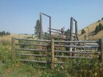 Canal inclinado del ganado Fotos de archivo