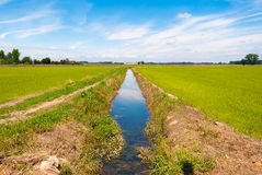 Canal for the irrigation of cultivated fields. In the plain Pianura Padana in northern Italy Stock Image