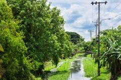 Canal jungle Stock Photo