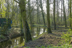 Canal meandering through spring forest Stock Photography