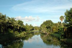 Canal in Miami with Vegetation stock photography