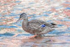 Canal na água da fada de Pinky Blue Imagens de Stock Royalty Free