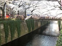Canal of Nakameguro Stock Image
