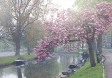 Canal in old town of Haarlem Stock Photos