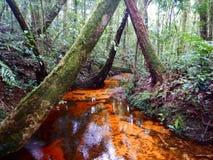 Canal orange dans la forêt Images libres de droits
