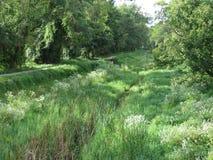 Canal overgrown de C&O Fotos de archivo libres de regalías