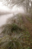 Canal path. Frosty and misty canal path  in the english countryside with trees and long grass Stock Photos
