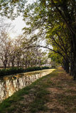 Canal path. With reflection of tree on the water in the morning time Royalty Free Stock Photography