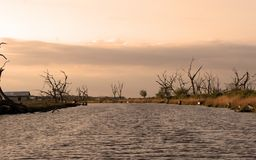 Canal In Point Aux Chenes Louisiana in the marsh. Old dead oak trees Royalty Free Stock Photography