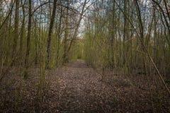 Canal que va del pequeño camino el bosque Fotos de archivo libres de regalías