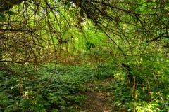 Canal que va del pequeño camino el bosque Foto de archivo libre de regalías