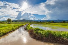 Canal and Rice Farm Royalty Free Stock Photos