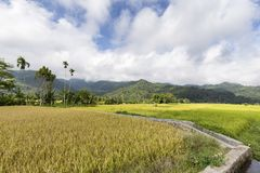 Canal and rice fields stock photos