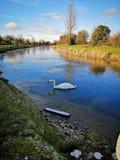 Canal royal en glace photos stock