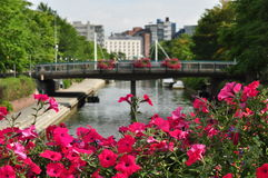 Canal in Ruoholahti Helsinki Finand with pink flowers in front royalty free stock images