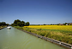 Canal and sunflower fields Royalty Free Stock Photos